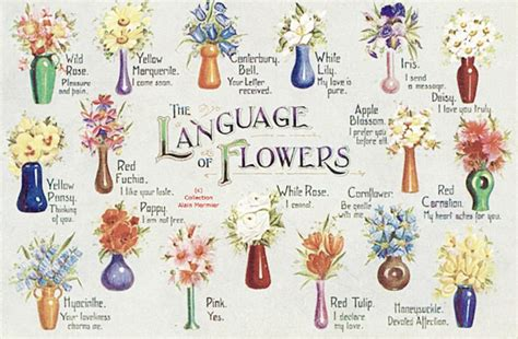 blooming lips a history of victorian flower language world of flowering plants