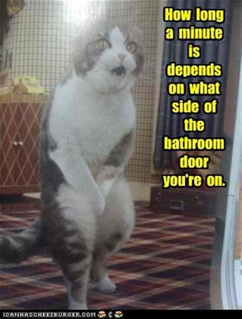 how often do cats go to the bathroom 31 very funny pee pictures and images