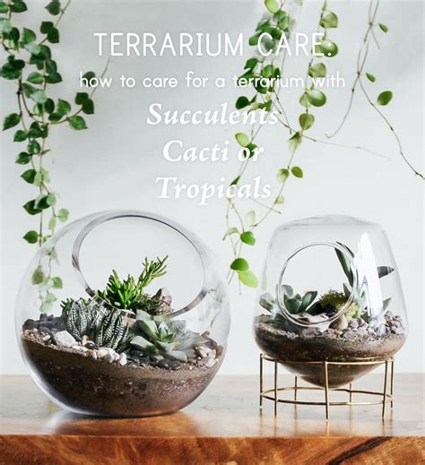 best plants for self contained terrarium terrarium care how to care for terrariums with succulents cacti tropicals pistils nursery
