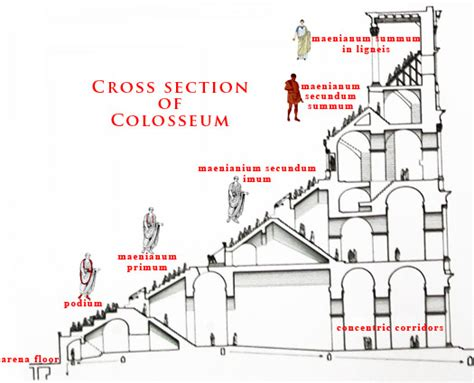 Cross Section Of Society by Colosseum Cavea Microcosm Of Social Structure