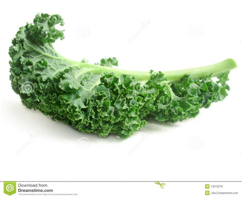 Curly Kale Leaves Royalty Free Stock Images   Image: 13012279