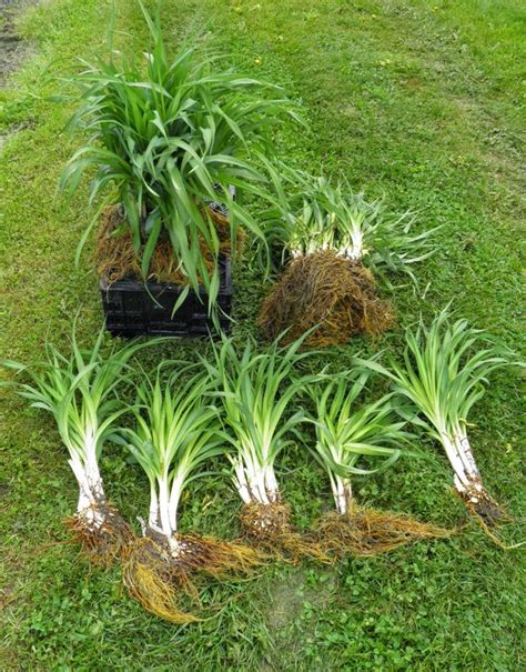 best 25 short plants ideas on pinterest succulents garden succulent landscaping and drought