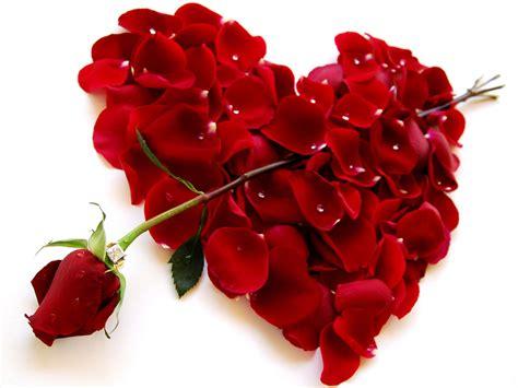 imagenes y rosas de amor imagen de rosa amor y im 225 genes