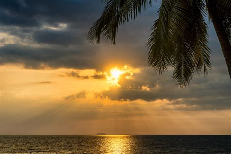 tropical palm tree  sunset ocean   hd