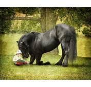 Best Horses Powerful Presence