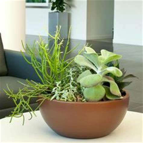 indoor plants arrangement ideas 1000 images about indoor plants on pinterest interior