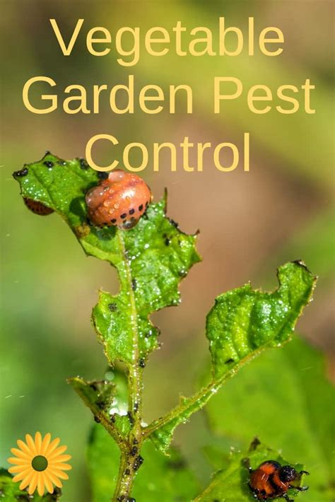 backyard pest control vegetable garden pest control backyard garden lover
