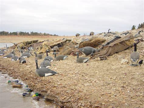 gooseview layout blinds late season duck decoy spreads images frompo 1