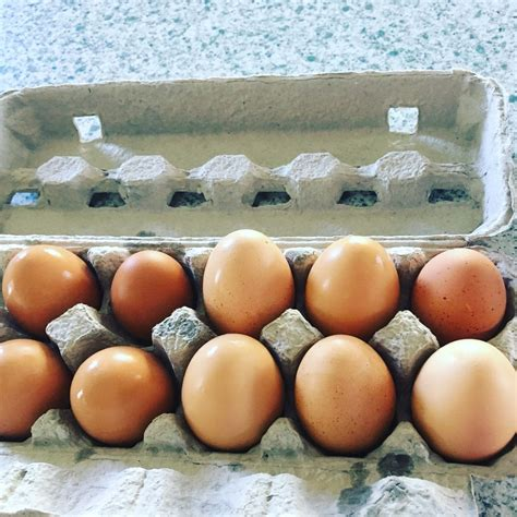buff orpington egg color buff orpington egg color page 6