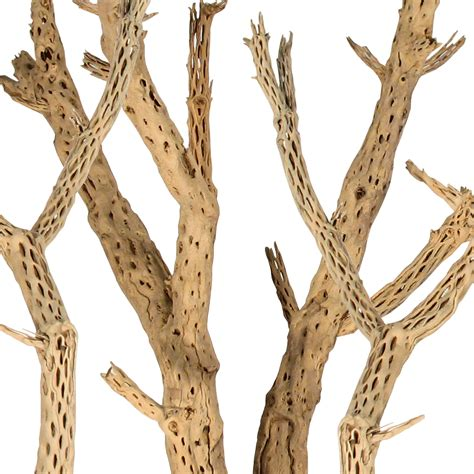 decorative wood branches for sale decorative branches cholla wood
