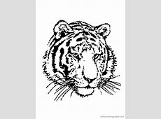 Coloriages Tigre - Les animaux - Page 2 Y Coloring Pages