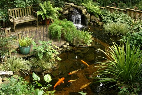 backyard water garden ponds and pondless water features for sale the pond doctor