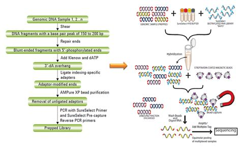 whole genome sequencing illumina whole exome sequencing report