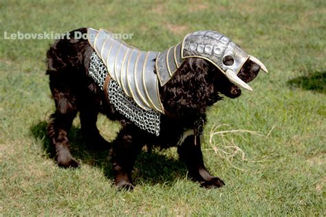 armour dogs battle armor pictures to pin on pinsdaddy