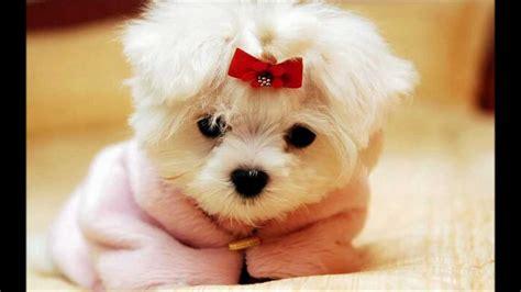 Imagenes De Perritos | fotos de perritos de todas las razas formas y tama 241 os