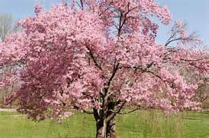 flowering trees tree growing birds blooms