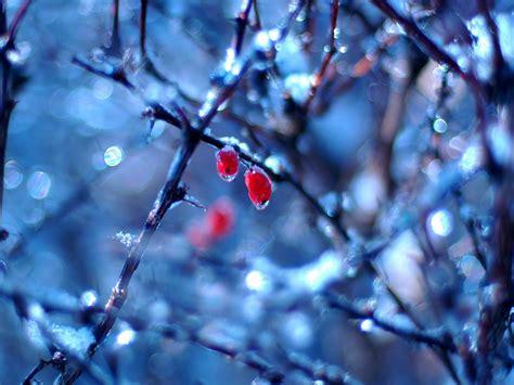 frozen winter wallpaper winter wallpaper images of winter for your desktop