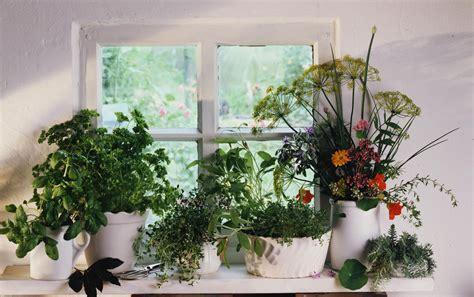 properly fertilize  indoor herb garden