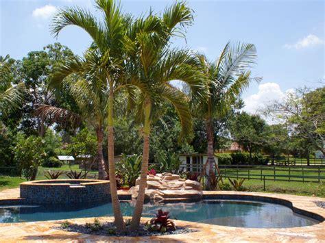 palm trees for backyard creating a professional backyard landscape hgtv