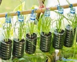 menanam lemon hidroponik 8 cara menanam hidroponik dengan botol bekas