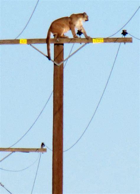 gig pole mountain climbs telephone pole photo dbtechno
