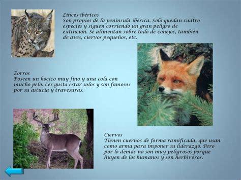 imagenes de animales con sus crias los animales vertebrados