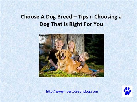 choosing a puppy choose a breed tips n choosing a that is right for you