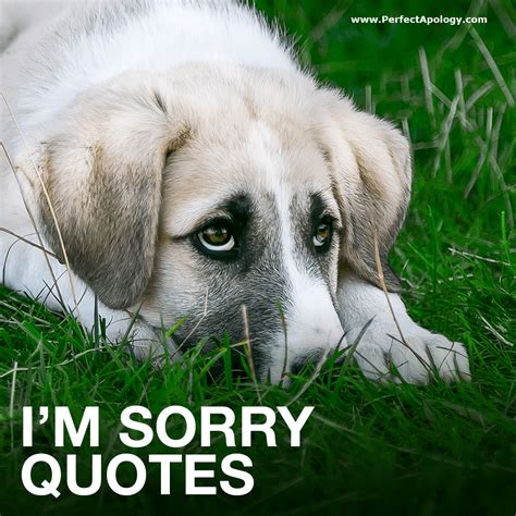 im sorry quotes best 33 i m sorry quotes to use in your apology