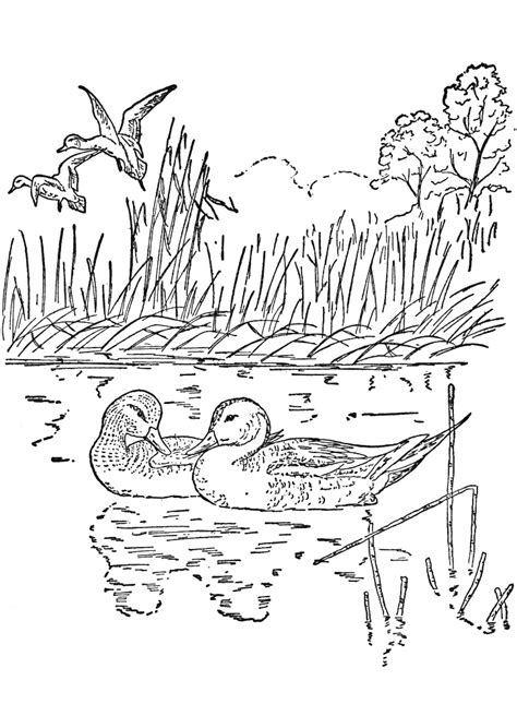 Coloring Page Nature by Nature Coloring Pages