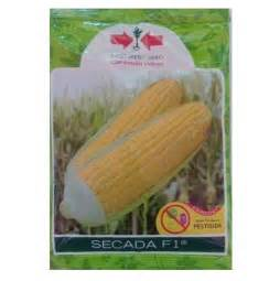 Bibit Jagung Manis Secada F1 jual benih jagung secada f1 200 gram panah merah bibit
