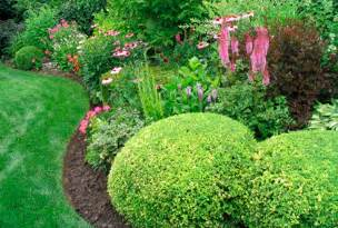 Online Backyard Design Tool types of evergreens for landscaping trees and shrubs