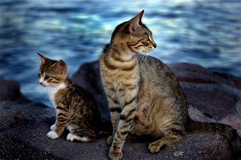 Cat Sepasang sedekah kepada kucing meowmagz
