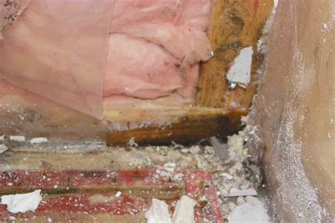 mold dangers protect your home on the job with basement