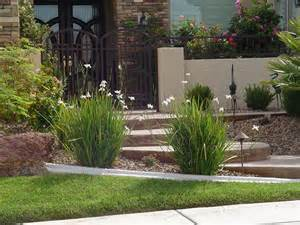 Formal Garden Plants - dietes butterfly grass 6 quot pot hello hello plants amp garden supplies