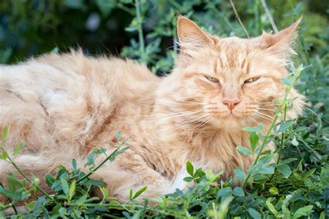 signs a is dying of age average cat age to die cats