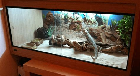 bearded dragon enclosures  buying guide