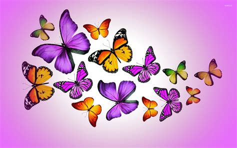 butterflies images orange and purple butterflies wallpaper artistic
