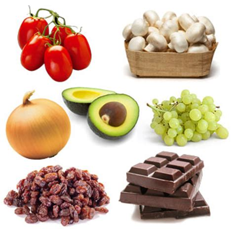 what foods are toxic to dogs 10 fruits vegetables that are toxic to dogs do you what they are