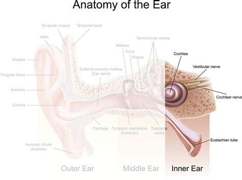 patologie orecchio interno l orecchio