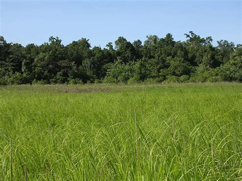 Free Extensive Search File Extensive Swland And Grassland In Sungai Clere Area Welaluhu Manufahi