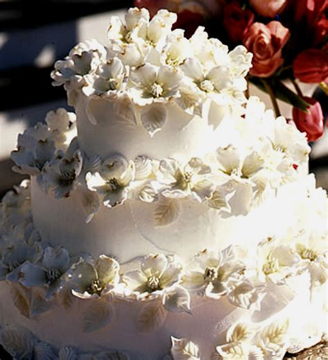 flowering wedding cake plant preview dogwood blossom wedding cake