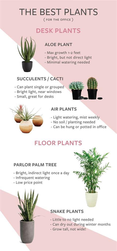 best low light office plants best 25 office plants ideas on pinterest plants indoor
