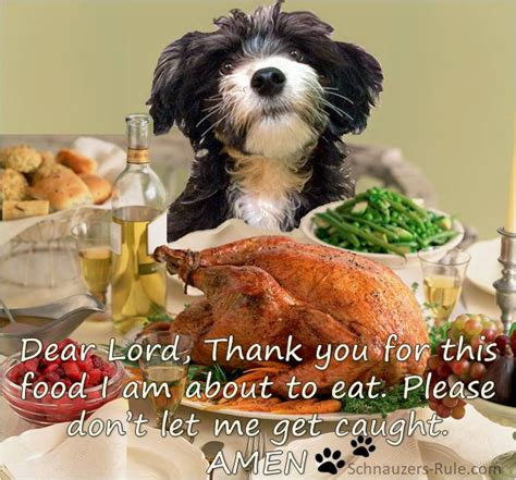 thanksgiving puppy thanksgiving safety for dogs
