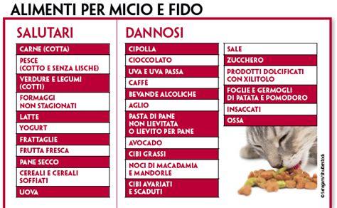 alimentazione per cani casalinga cibo per cani e gatti casalingo o industriale quattro