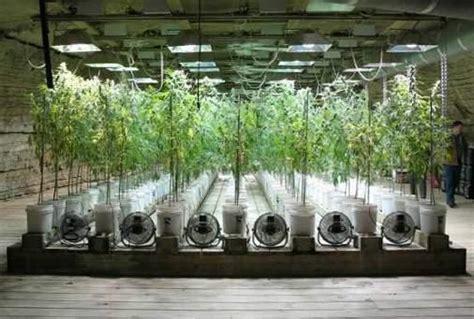 cultivos interior cultivo interior de marihuana