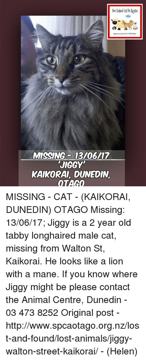 Missing Cat Meme - missing cat meme 28 images missing cat meme 28 images