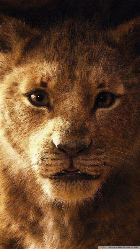 lion king    hd desktop wallpaper   ultra