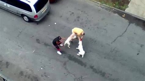 pitbull attack bronx pit bull attack leads to arrest cnn