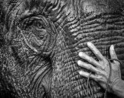 1325266736 des elephants et des hommes des el 233 phants et des hommes derniers jours news