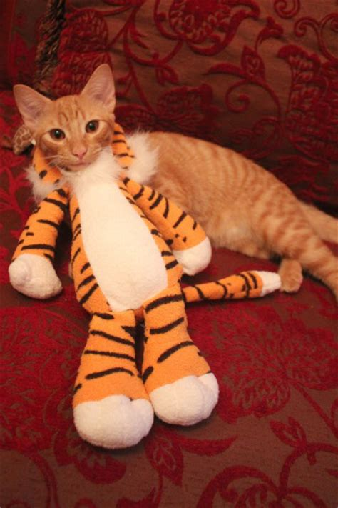 cheerful diy cat halloween costumes shelterness
